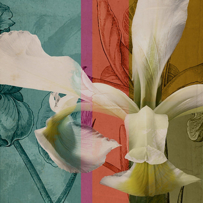 Iris I - A.A.S. Original