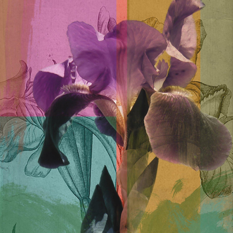 Iris III - A.A.S. Original