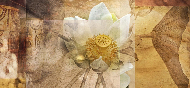 Lotus - A.A.S. Original