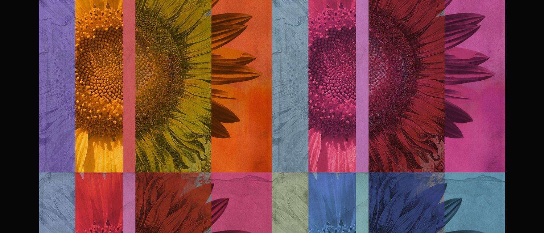 Sunflower Composition - A.A.S. Original
